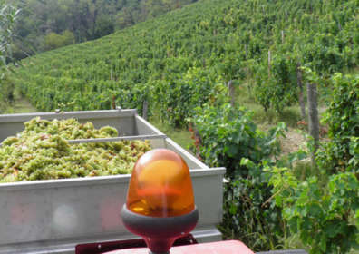 Wine production in Piedmont
